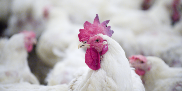 22 jobs saved as poultry packager is sold out of administration
